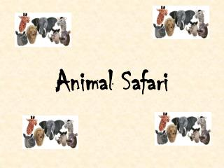 Animal Safari