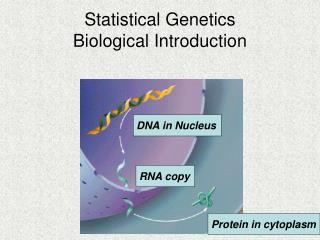 Statistical Genetics Biological Introduction