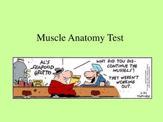 Muscle Anatomy Test