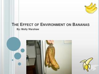The Effect of Environment on Bananas