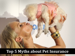 Top 5 myths about Pet Insurance