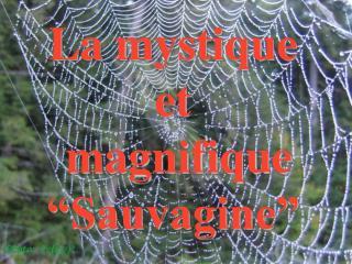 La mystique et  magnifique  Sauvagine
