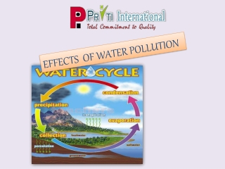 The Effects of Water Pollution
