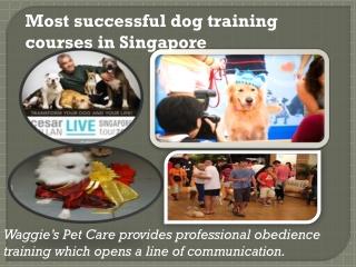 Successful Dog Training Courses