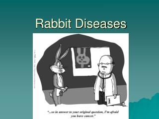 rabbit diseases