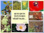 QUELQUES TEINTURES V G TALES   G. CURY