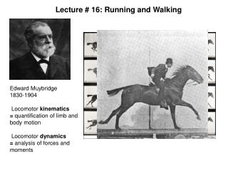 Edward Muybridge  1830-1904   Locomotor kinematics  quantification of limb and body motion   Locomotor dynamics  analysi