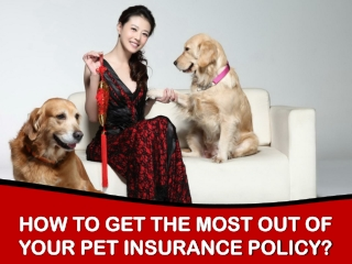How to get the most out of your Pet Insurance policy?