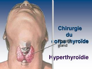 Chirurgie du  corps thyro de