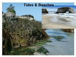 BEACHES Nearshore Sediment Transport  Tides  What are Tides Tides in the Coastal Ocean What Causes Tides