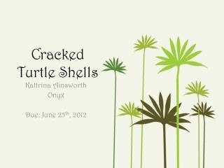 Cracked Turtle Shells