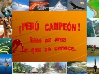 El  pisco  es peruano.    El  cebiche  o  seviche es peruano.    La  chirimoya es peruana.    La  guan bana es peruana.