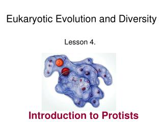 Eukaryotic Evolution and Diversity