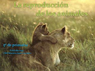 La reproducci n                               de los animales