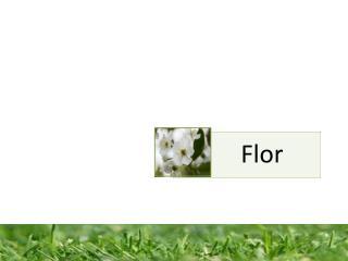 Constitui  o de uma flor completa