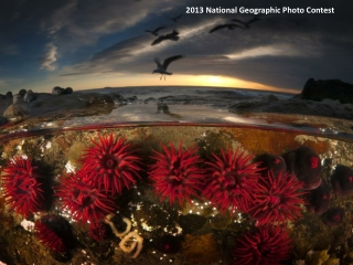2013 National Geographic Photo Contest
