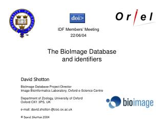 The nature of bioinformatics databases
