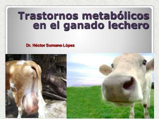 Trastornos metab licos en el ganado lechero