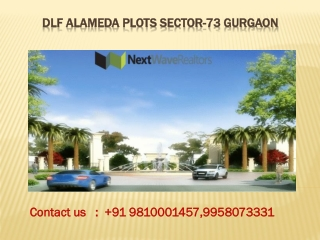 dlf alameda Plots sector 73 gurgaon