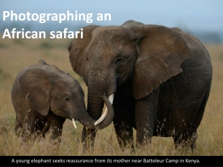 Photographing an African safari