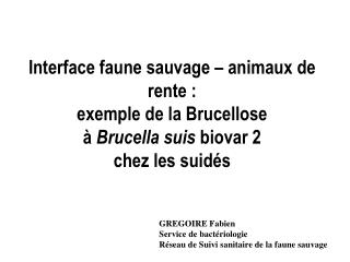Interface faune sauvage   animaux de rente :  exemple de la Brucellose    Brucella suis biovar 2 chez les suid s