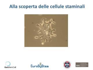 Alla scoperta delle cellule staminali