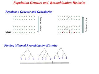 Population Genetics and  Recombination Histories