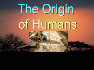 The Origin  of Humans