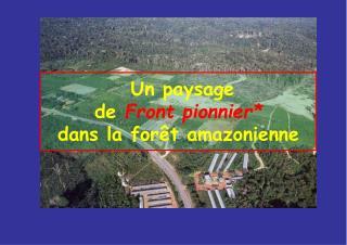 Un paysage de Front pionnier  dans la for t amazonienne