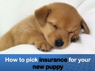 How to pick insurance for your new puppy