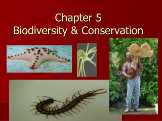 Chapter 5 Biodiversity  Conservation