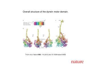 T Kon et al. Nature 000, 1-6 2012 doi:10.1038