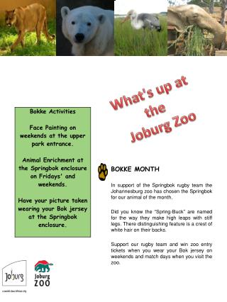 BOKKE MONTH  In support of the Springbok rugby team the Johannesburg zoo has chosen the Springbok  for our animal of the