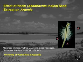 Effect of Neem Azadirachta indica Seed Extract on Artemia
