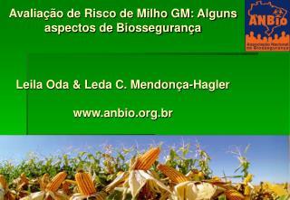 Avalia  o de Risco de Milho GM: Alguns aspectos de Biosseguran a    Leila Oda  Leda C. Mendon a-Hagler  anbio.br