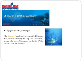 Belize Diving Packages