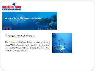 Belize Diving Packages