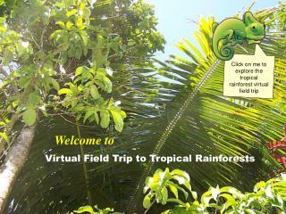 Virtual Field Trip to Tropical Rainforests