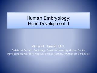 human embryology: heart development ii