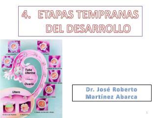 ETAPAS TEMPRANAS DEL DESARROLLO