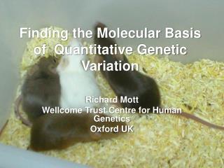 Finding the Molecular Basis of  Quantitative Genetic Variation