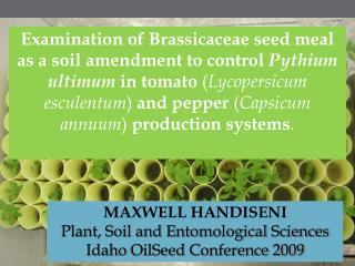Examination of Brassicaceae seed meal as a soil amendment to control Pythium ultimum in tomato Lycopersicum esculentum a