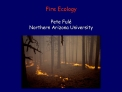 fire ecology  pete ful  northern arizona university