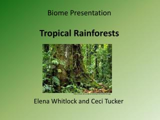 Biome Presentation  Tropical Rainforests