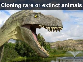 Cloning rare or extinct animals
