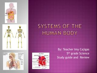 Systems of the Human Body