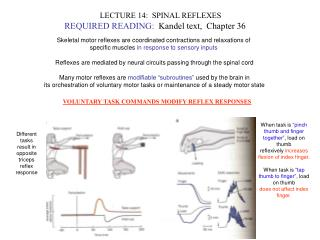 LECTURE 14:  SPINAL REFLEXES