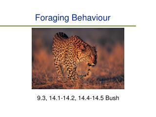 Foraging Behaviour