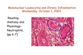 Mononuclear Leukocytes and Chronic Inflammation Wednesday, October 1, 2003