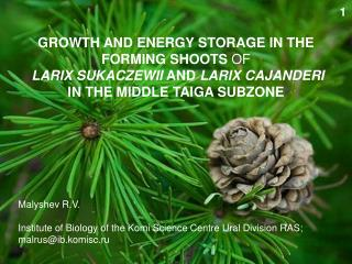 GROWTH AND ENERGY STORAGE IN THE FORMING SHOOTS OF  LARIX SUKACZEWII AND LARIX CAJANDERI  IN THE MIDDLE TAIGA SUBZONE